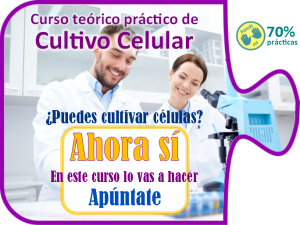 Curso práctico de Cultivo Celular On Science 2016