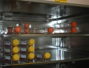 Suero en Cultivos celulares - On Science cultivo celular