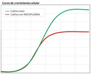 Crecimiento de cultivo celular comparado con contaminado con micoplasma
