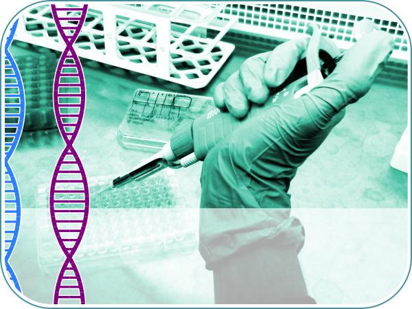 Curso practico de transfeccion en cultivo celular