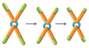 Uno de los métodos para determinar la longitud telomérica es la PCR a tiempo real.