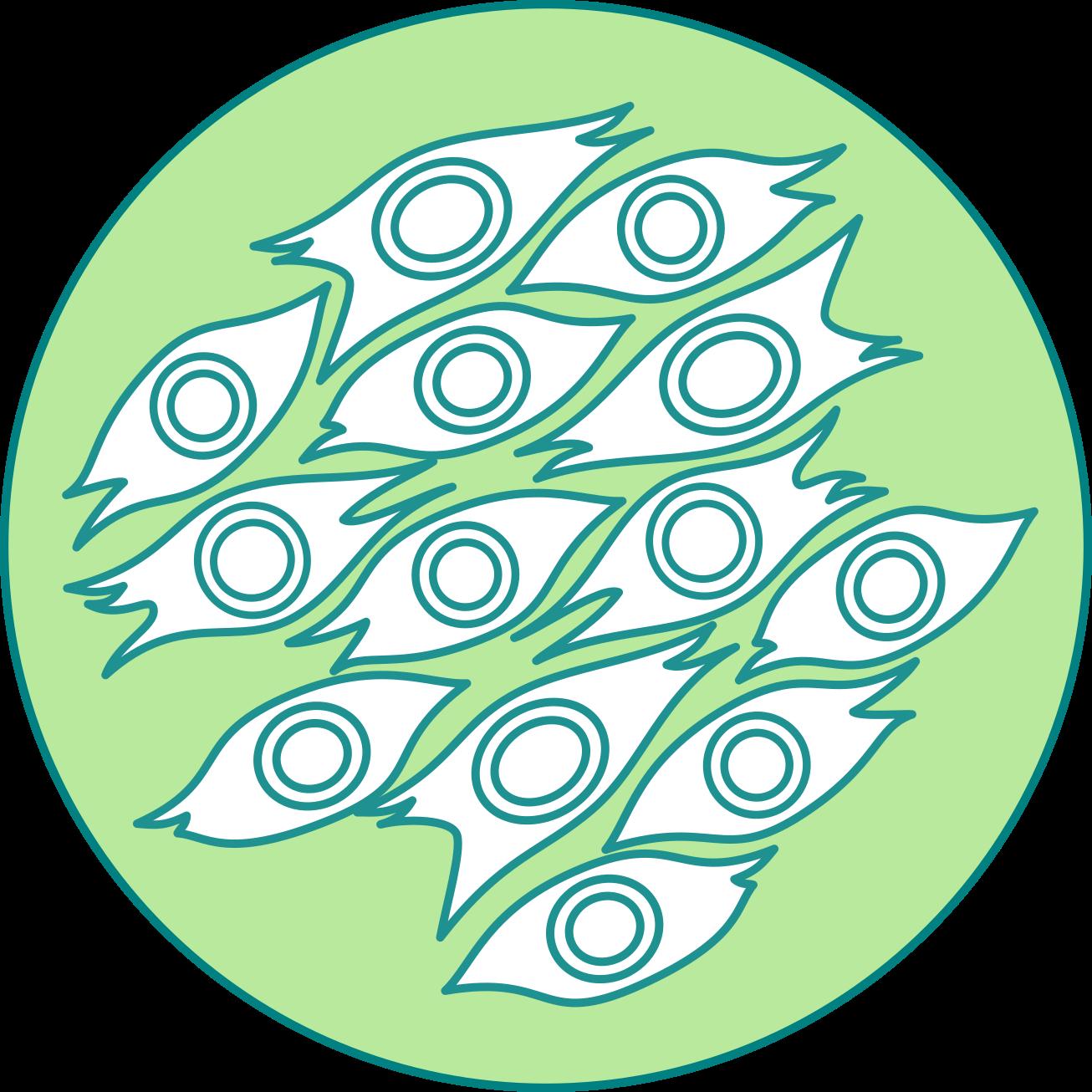 cultivo primario celulas madre terapias celulares