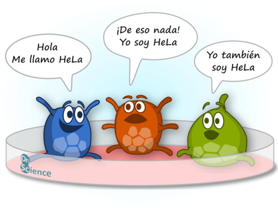 Variabilidad cultivo celular HeLa