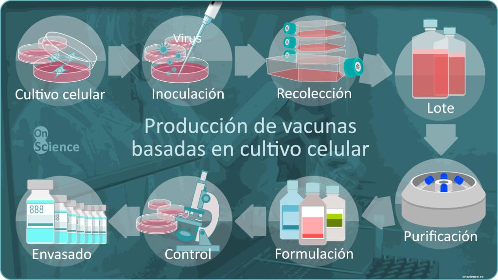 Infografía sobre el proceso de producción industrial de vacunas basadas en cultivos celulares mediante inoculación de virus